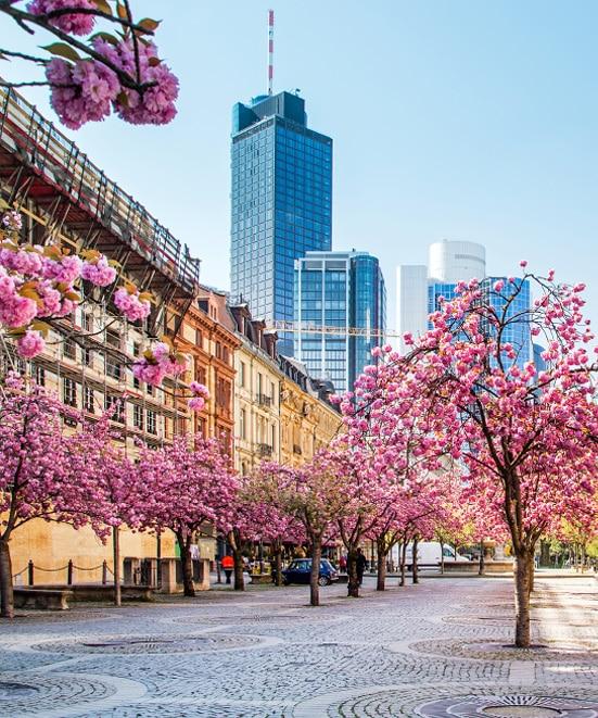 Wohnung im Zentrum Frankfurt